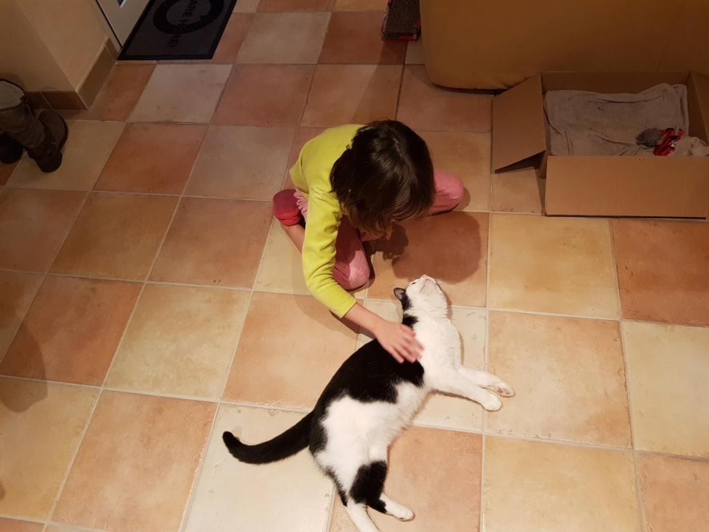 MALENA, chatte noire et blanche européenne, née en août 2016 Malena10
