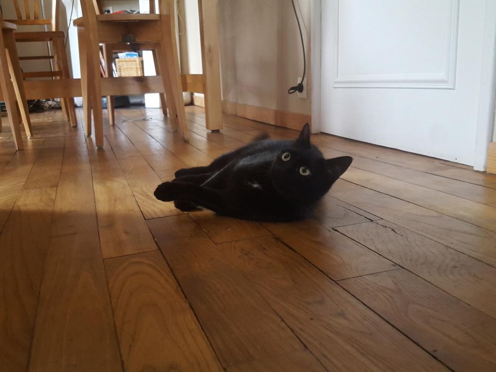 NOLLIE, femelle Noir, type européen née en Octobre 2017 Nollie14