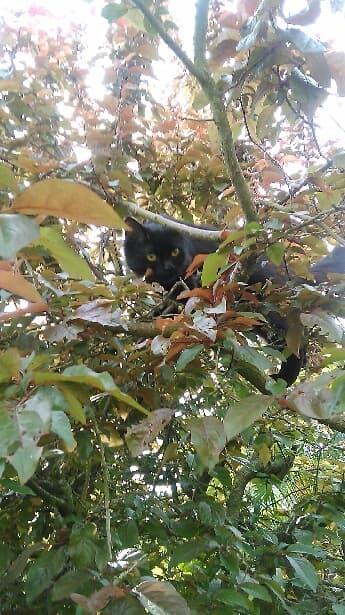 JOLANTA, Femelle noire, type européen née en février 2014 Ojjola10