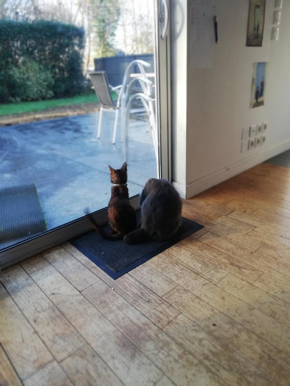 OSIA, femelle tricolore, type chat de maison, née le 1/08/2018 Osia10