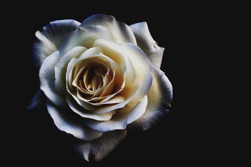 Le Sacré, La Religion. Flower10