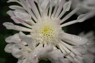 Le Sacré, La Religion. Flower11