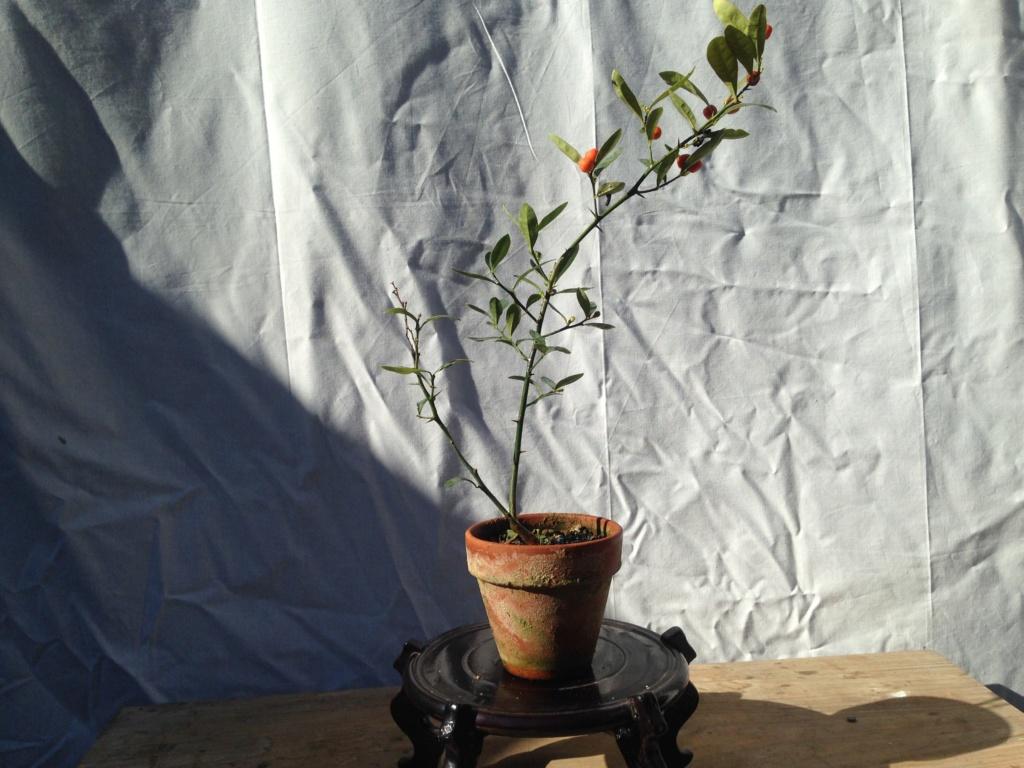 semillas Img_5912