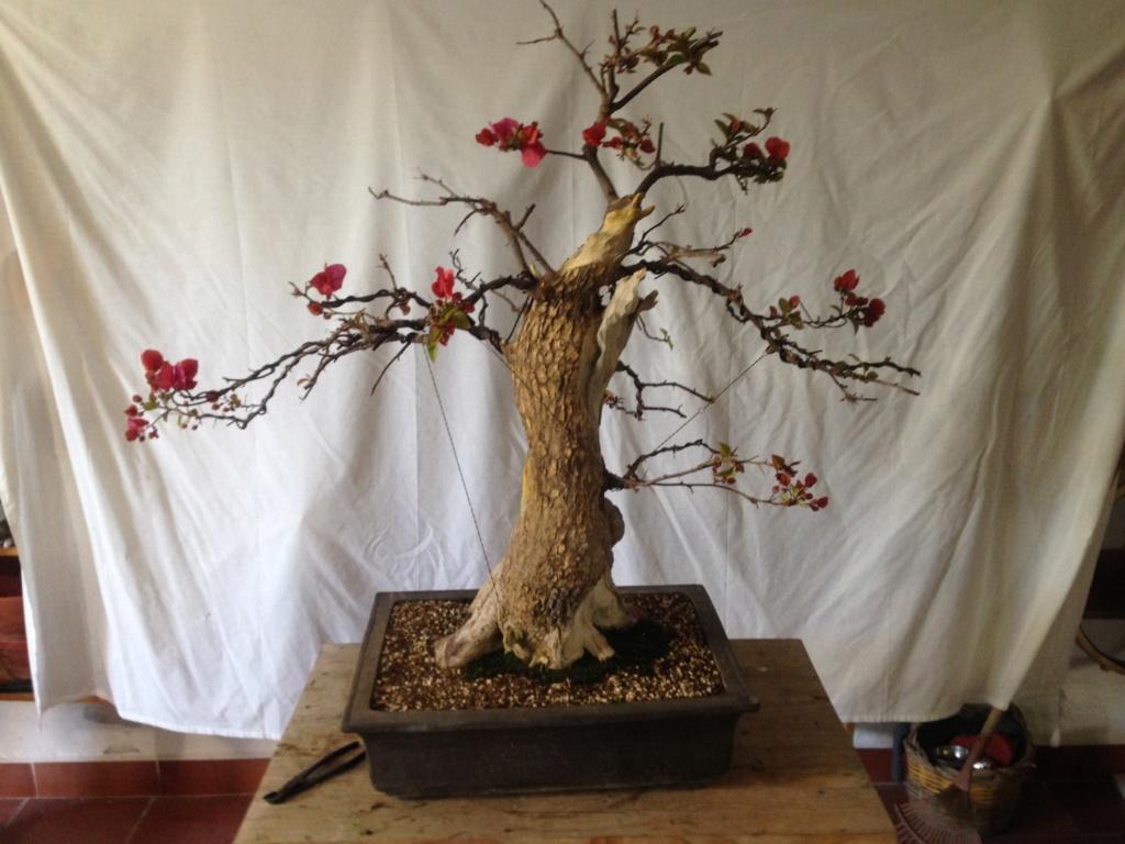 No sé si  es un bonsai Img_7410