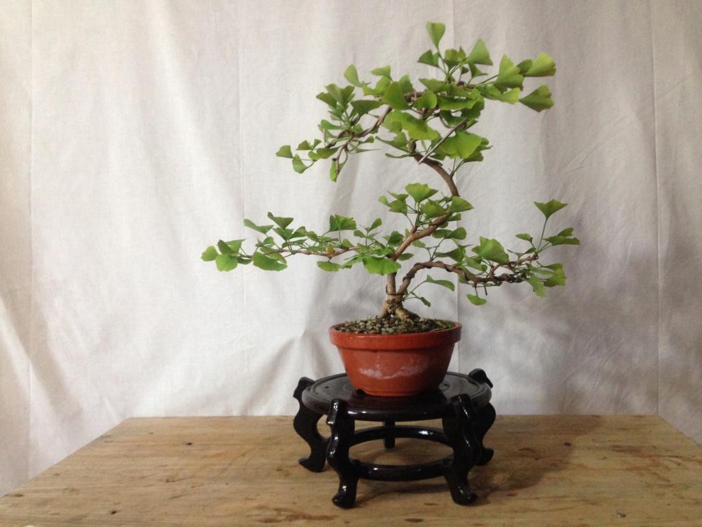 Mi primer bonsai. ¿Duda? Img_7810