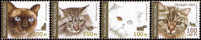 Katzen - Seite 2 Hu500610