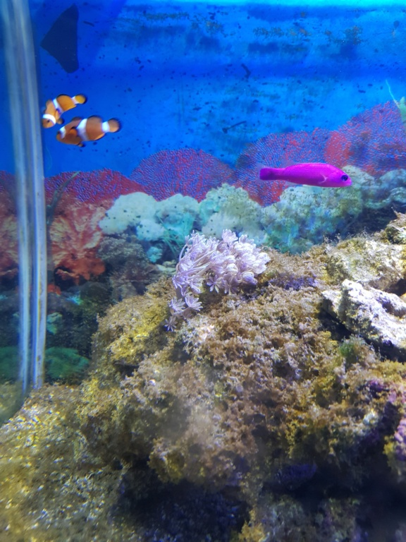 Aquarium 250L 15475314