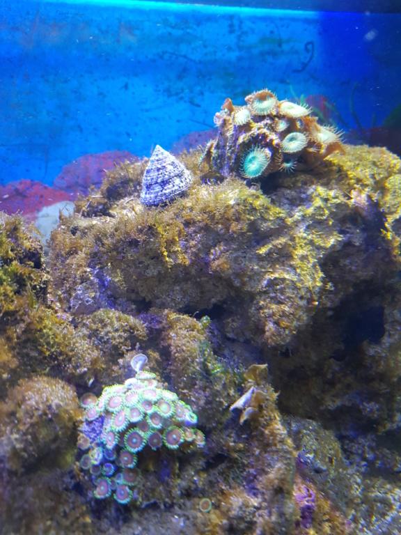 Aquarium 250L 15475315