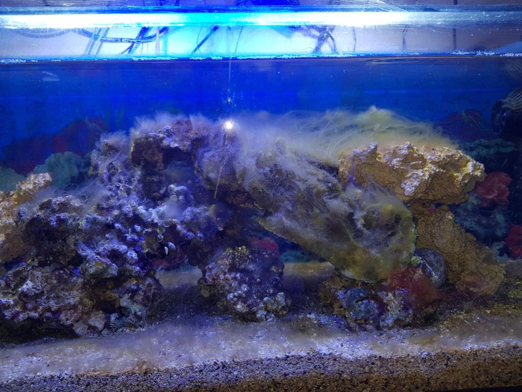 Aquarium 250L 20180910