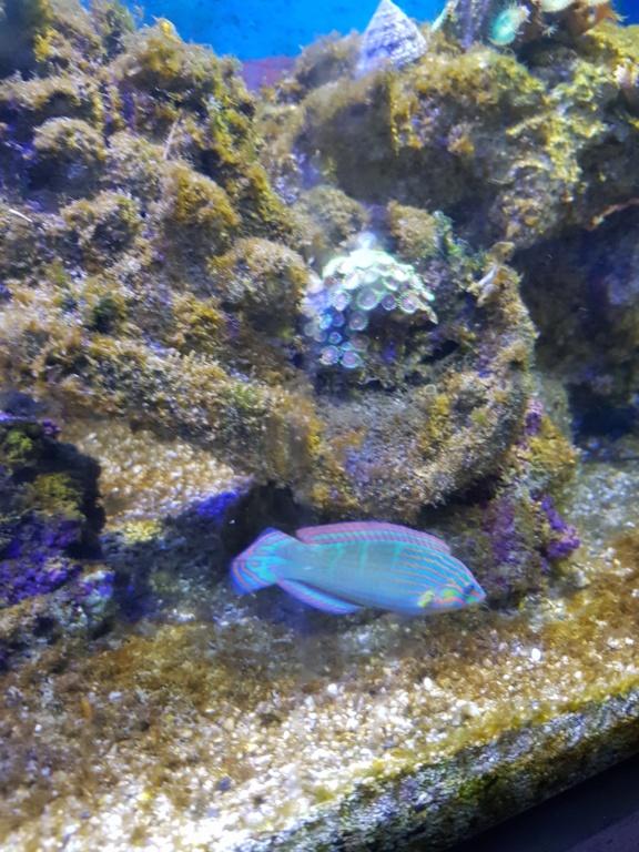 Aquarium 250L 20190111