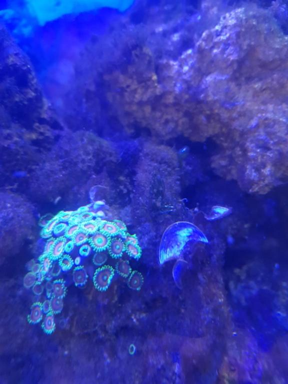 Aquarium 250L - Page 2 20190117