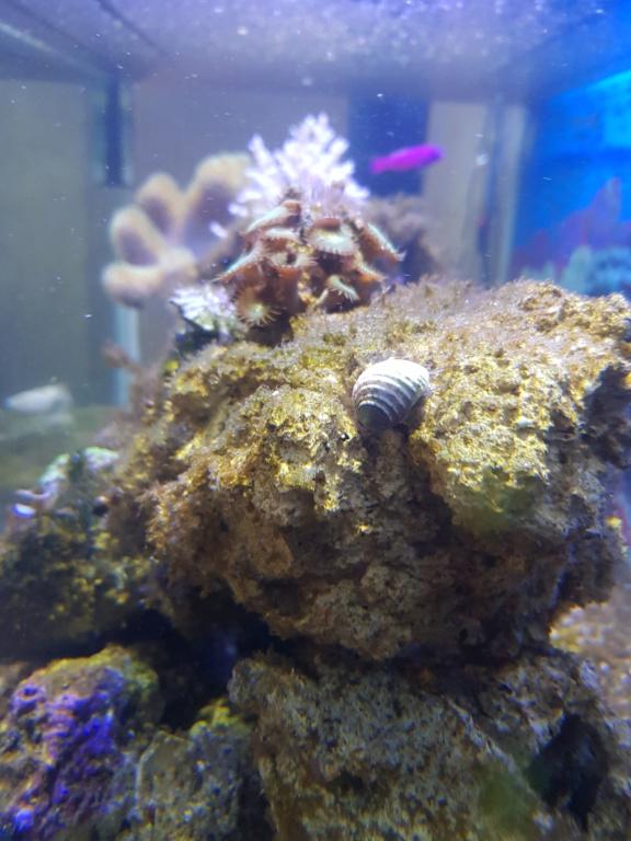 Aquarium 250L - Page 2 20190118