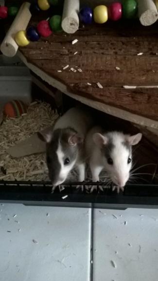 Voici mes deux filles Wp_20110