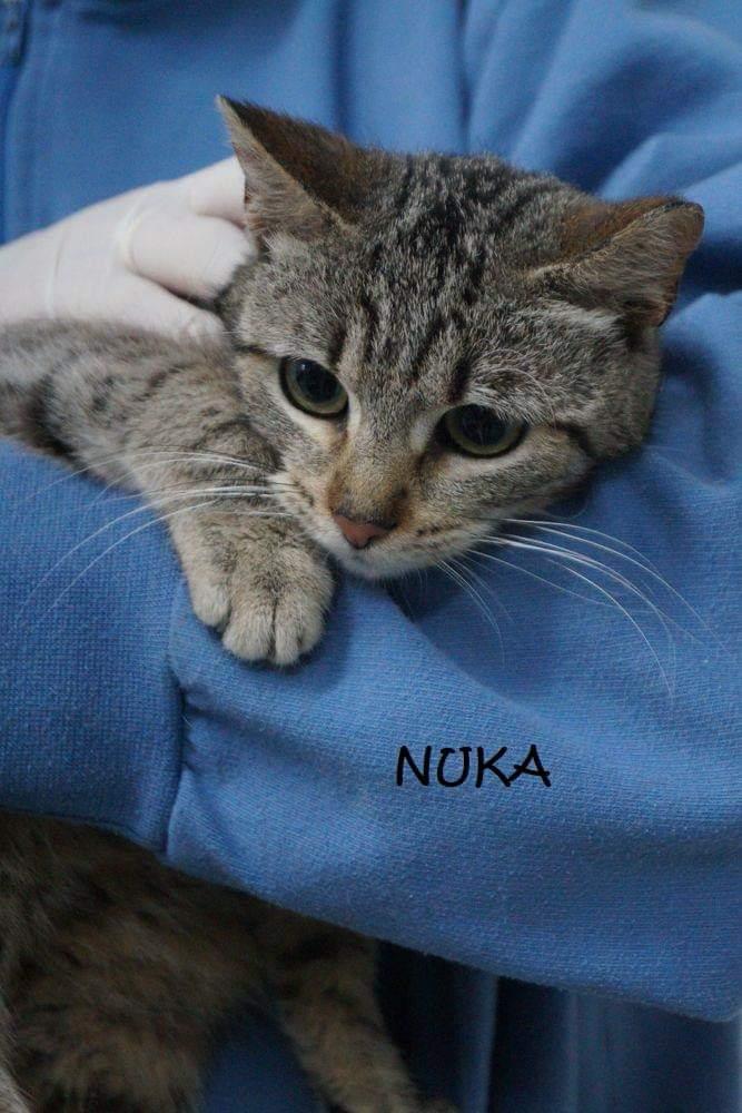 NUKA- TIGREE - En Suisse Nuka210