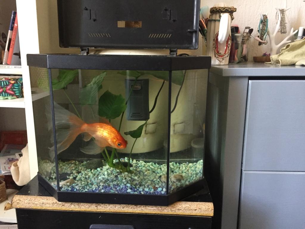 Qui mettre avec un poisson rouge?  - Page 2 Img_6510