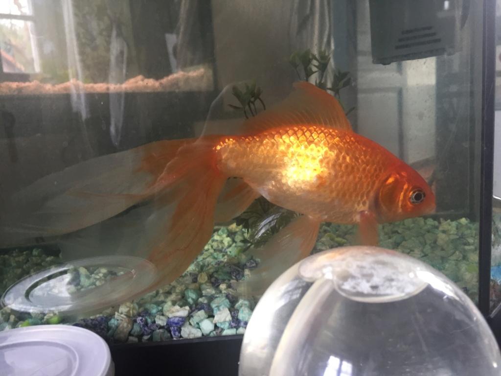 Qui mettre avec un poisson rouge?  - Page 2 Img_6710