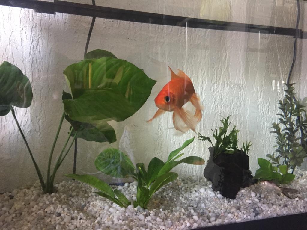 Qui mettre avec un poisson rouge?  - Page 2 Img_6718