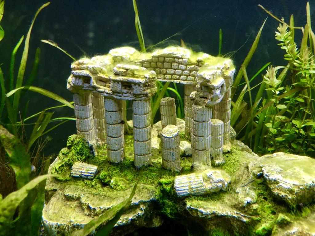 Nouvel aquarium et déjà quelques soucis  1e3fac10