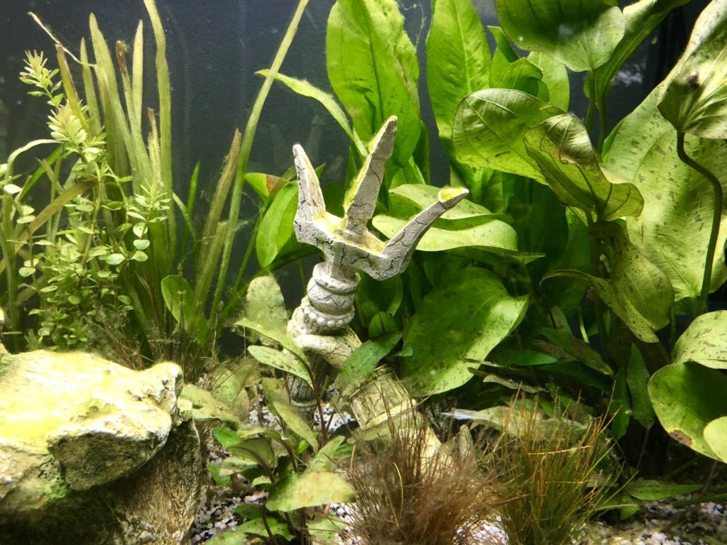 Nouvel aquarium et déjà quelques soucis  4ca14f10