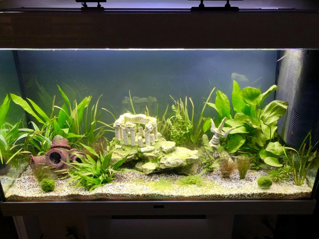 Nouvel aquarium et déjà quelques soucis  56552110