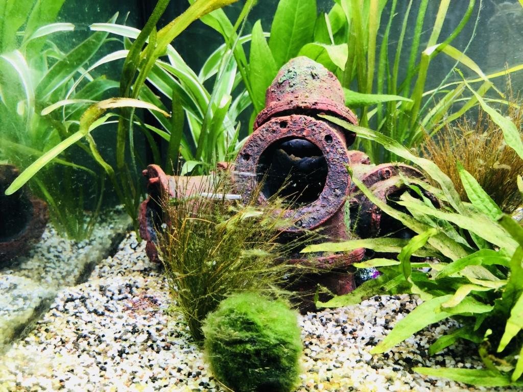 Nouvel aquarium et déjà quelques soucis  7b636010
