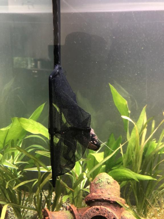 Nouvel aquarium et déjà quelques soucis  88c39110