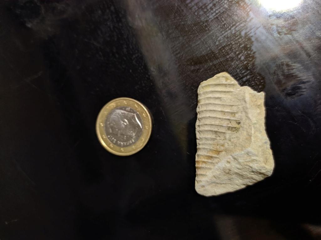 Identificar fosil Img_2014