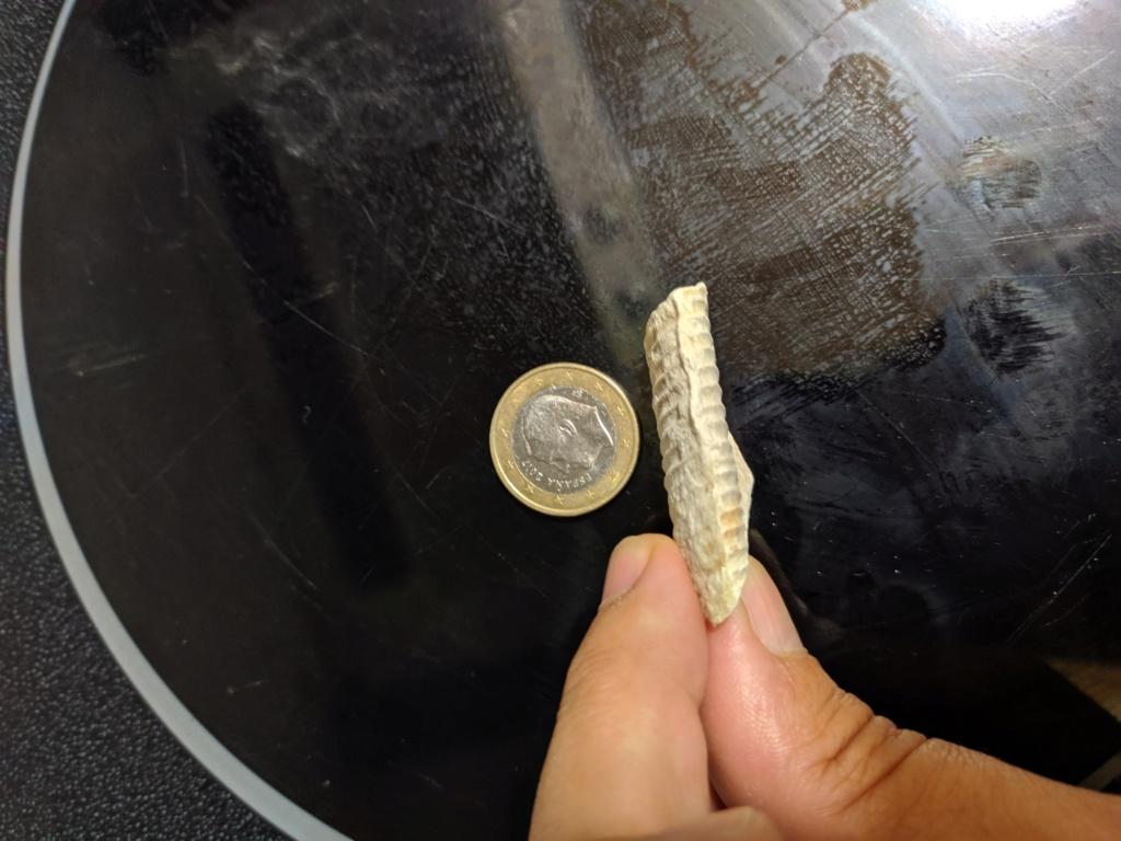 Identificar fosil Img_2015