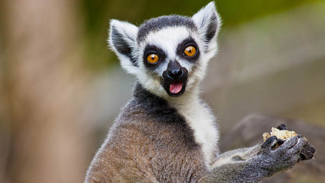 [TORNEO] The Animals: 1°Prova! - Pagina 2 Lemure10