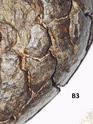 Identification de ces pierres, sont elles des météorites ? B2_210