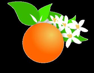 Coltivare Bio Naturale