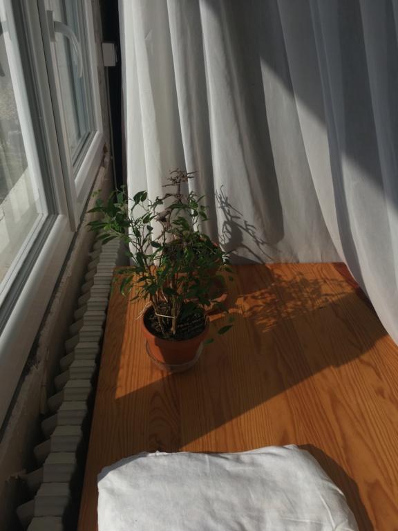 Identification de ma plante verte D5d85610