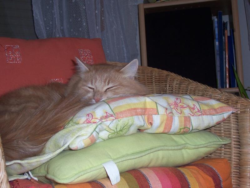 présentation de vos animaux: chats: Chat_n10