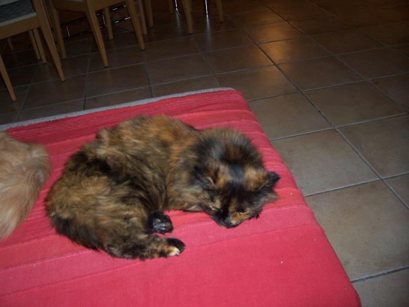 présentation de vos animaux: chats: Nouvel11