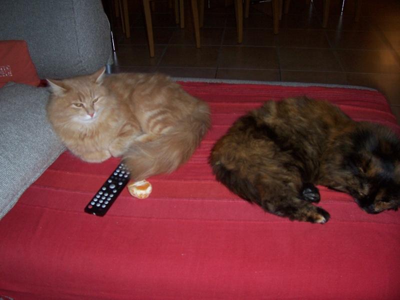 présentation de vos animaux: chats: Nouvel12