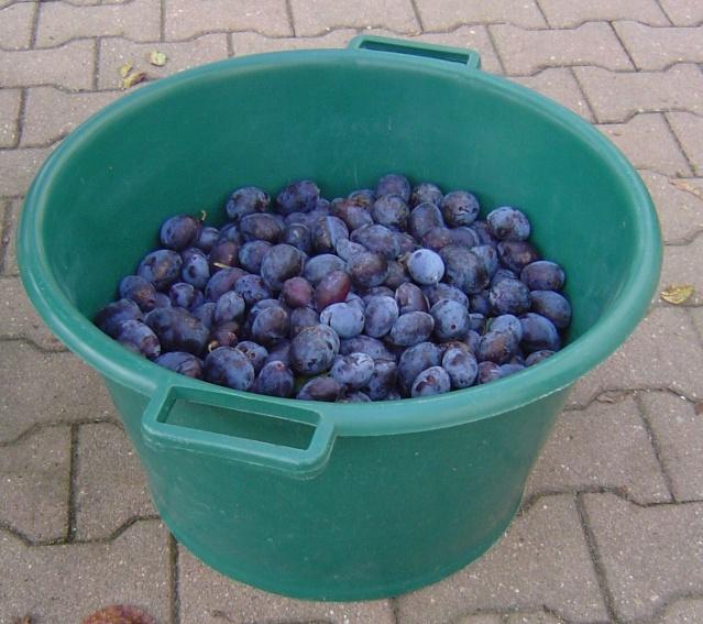 Les  fruits du  jardin Araign11