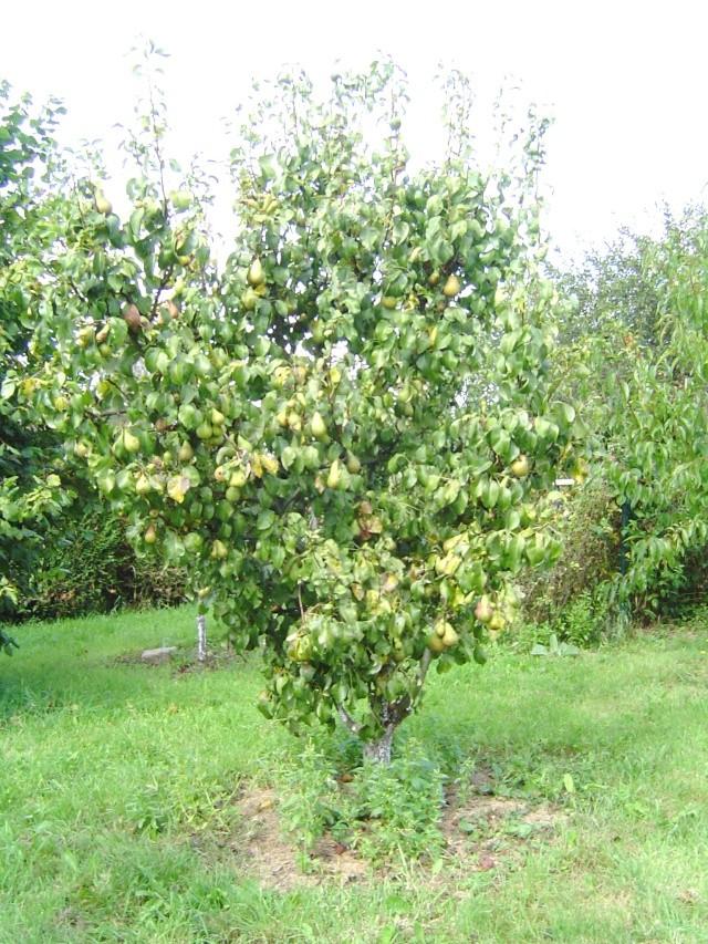 Les  fruits du  jardin Araign13