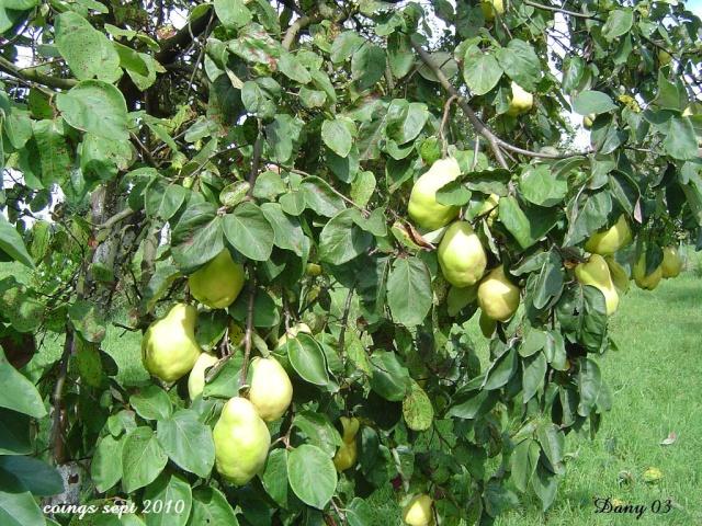 Les  fruits du  jardin Araign15