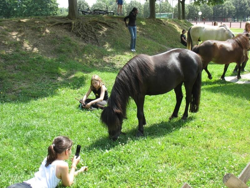cheval ou poney? 13_jui14