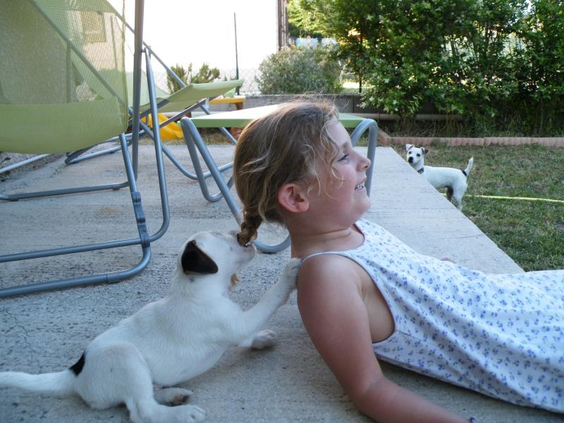 Jack Russell terrier Webring 410