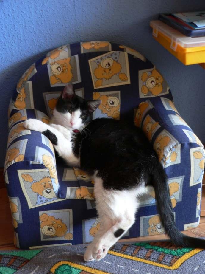 chat 'alors P1120113