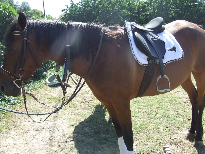 Matériel d'équitation, t.cheval, travail et repos Dscf5813