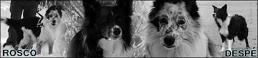 chien - A la recherche du chien à adopter :) 26486210