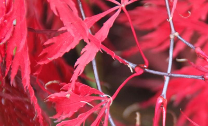 Couleurs d'automne, petit moment d'émerveillement Img_3028