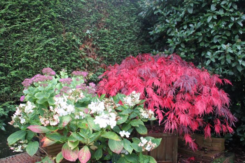 Couleurs d'automne, petit moment d'émerveillement Img_3029