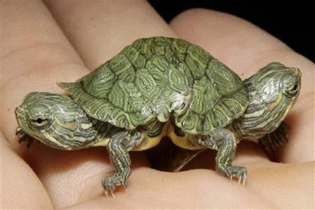 Ma tortue (pour le plaisir des critiques de Génia !!) Tortue10