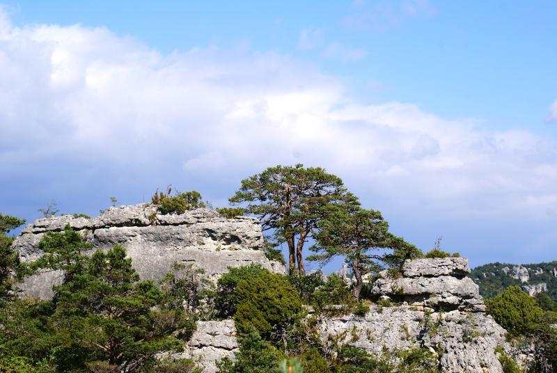 Les Gorges du Tarn Dsc07015