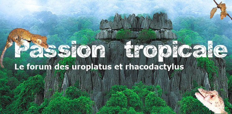 Passion Tropicale vous souhaite la bienvenue