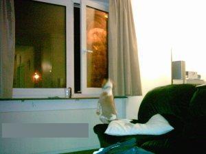 Que regarde ce chien ??? - Page 2 Articl13