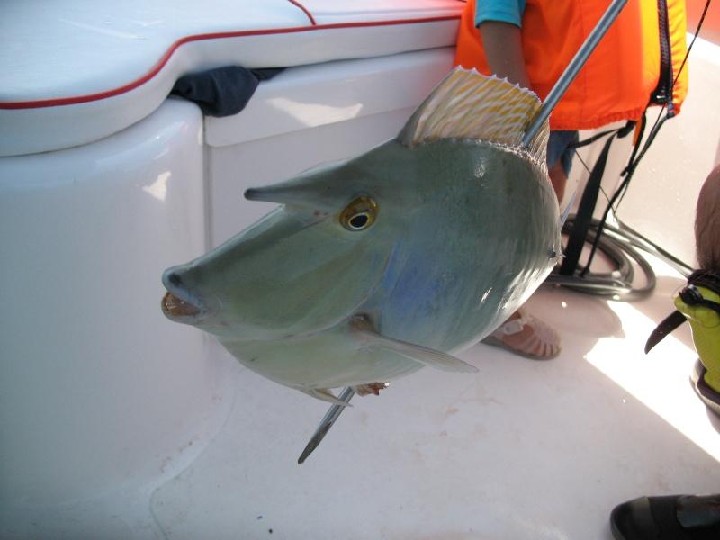 Ma pêche lagonnaire en décembre en nouvelle calédonie Img_1610